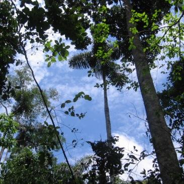 bonito cielo, Tambopata nov2008